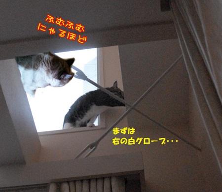 テンちゃん家3