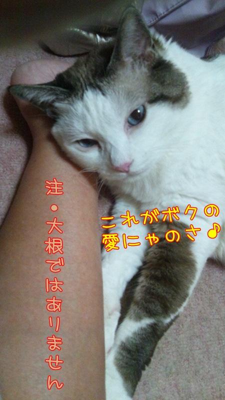 DSC_0022_201407170030459af.jpg