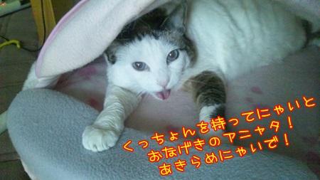DSC_0176_201408280042004ed.jpg