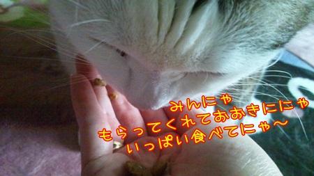 DSC_0230_20140616224237db6.jpg