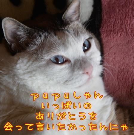 DSC_2035_201409140134519b6.jpg