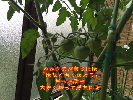 IMG_0691.jpg