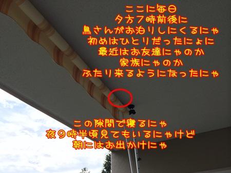 IMG_0697.jpg