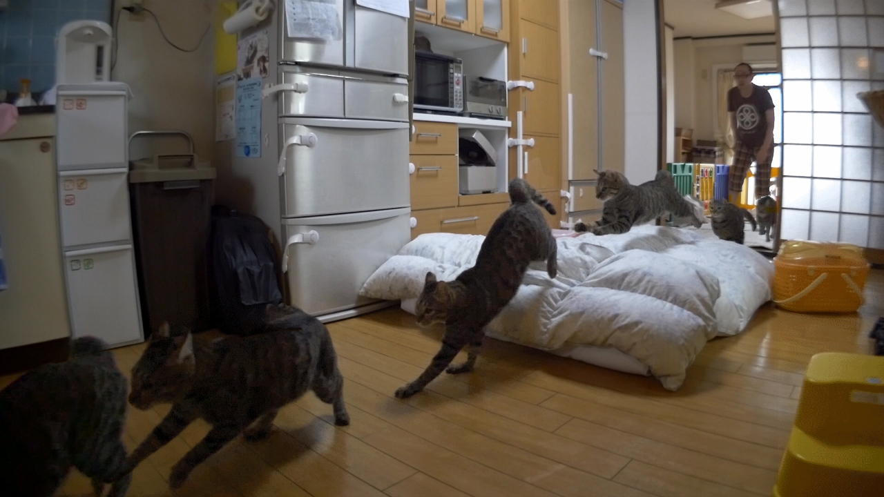 habatobi2.jpg