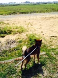 散歩大好き