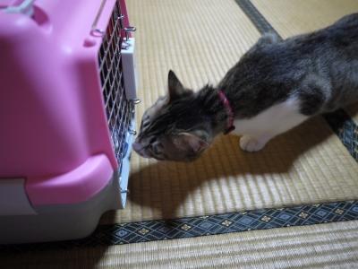 先住猫うめちゃん