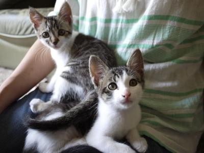 梅ちゃんと安ちゃん、お膝猫