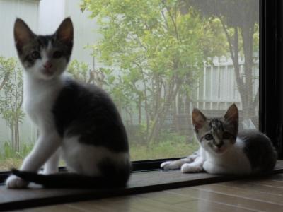 窓辺の梅ちゃんと安ちゃん