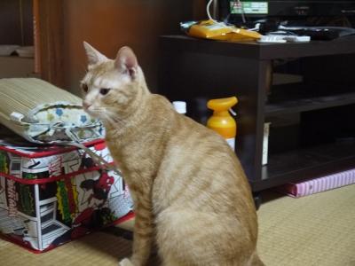 立派な青年猫になりました。