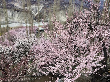 写真 2014-03-29 14 33 35