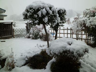 またしても、雪