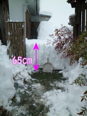 実測65cm