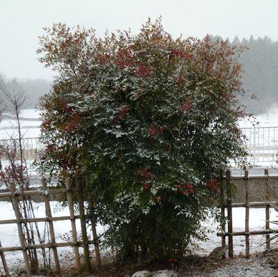 2月14日雪が降り始めのころ