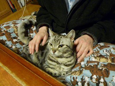 ついに、膝猫しま!?