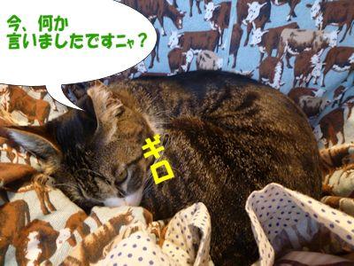 猫の地獄耳?