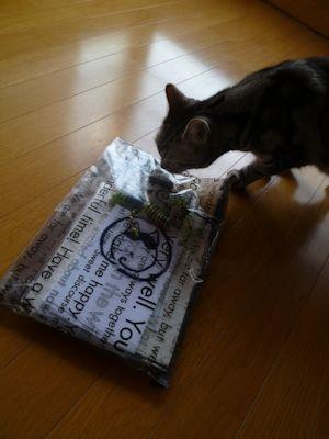 猫の日のピタリ賞♪