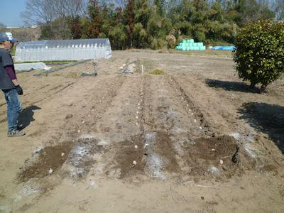 ジャガイモ植えた!