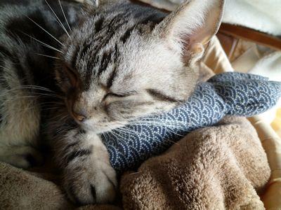 猫ベッドで寝たり、カァチャンとこ行ったり、忙しいデスー