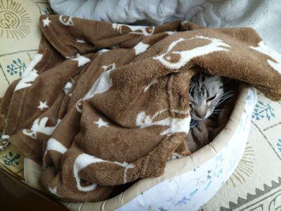 お気に入りの猫ベッド