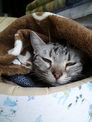 猫も春眠デスー