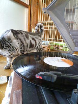 レコードとしま1