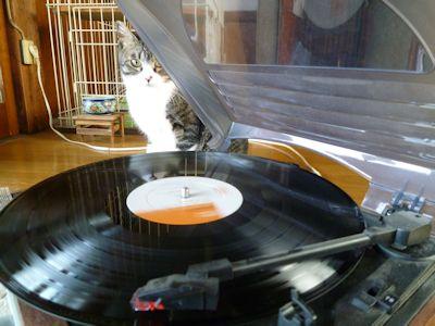 レコードとふく