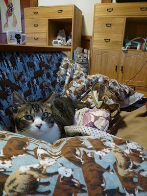 カァチャンを待つ猫たち