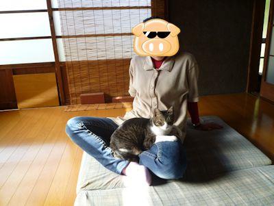 すっかりお膝好き猫