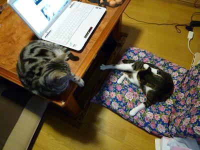 猫まみれの朝2
