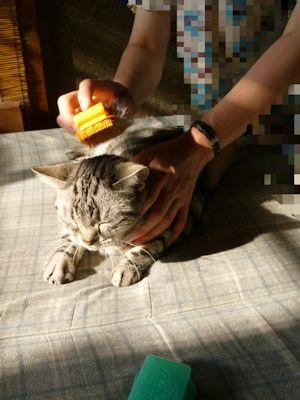 しまを梳かす