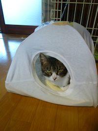 ねこテントその後