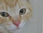 cat_35957_3.jpg