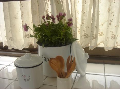 ビオラとキッチン