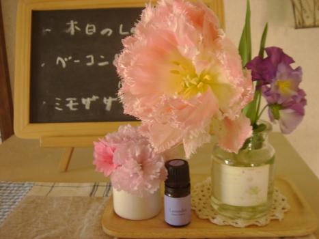 フリンジ咲きハウステンボス&桜+つつじ
