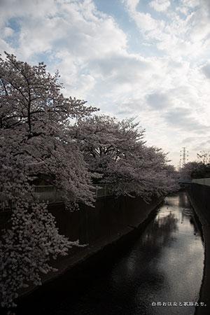 20140401-_MG_2199.jpg