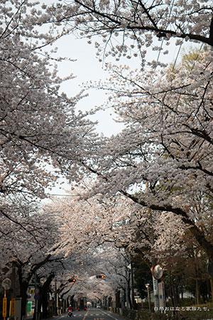 20140402-_MG_2211.jpg