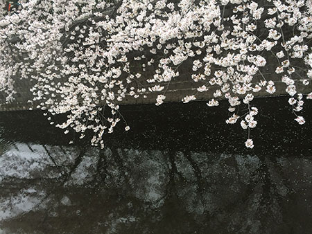 写真-2014-04-02-16-59-16