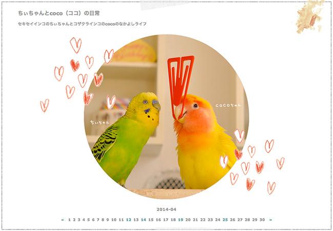 Parakeet.jpg