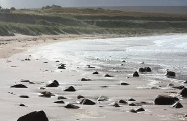 ビーチ 海岸 海 波