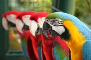 鳥 思考 オウム