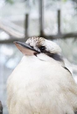 鳥 バード 眺める