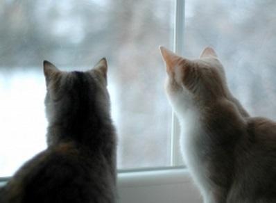 猫 夫婦 協力