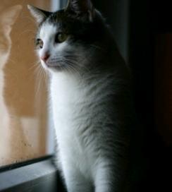 猫 表情 凝視