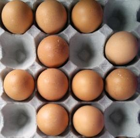 卵 プロテイン