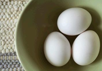 卵 籠 ポートフォリオ