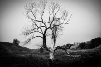 枯れ木 夢