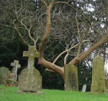 お墓 葬式