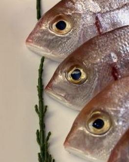 魚 ゴール