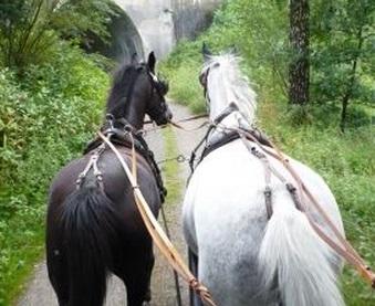 馬車馬 ペア カップル