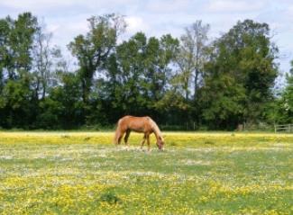 馬 草原 マイペース